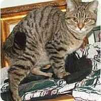 Adopt A Pet :: Tukiko - Davis, CA