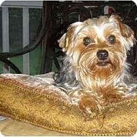 Adopt A Pet :: Lexus - Mooy, AL