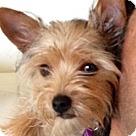 Adopt A Pet :: Mini