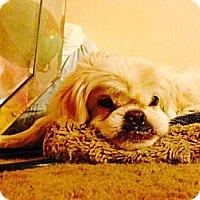 Adopt A Pet :: China - conroe, TX