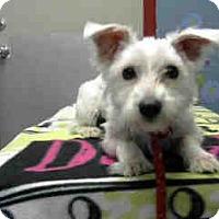 Adopt A Pet :: Wrigley - Simi Valley, CA