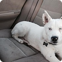 Adopt A Pet :: Olick - Marina del Rey, CA