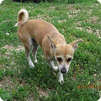 Adopt A Pet :: Jack - Buffalo, WY
