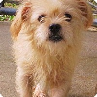 Adopt A Pet :: Marvin - Williston Park, NY