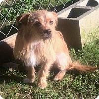 Adopt A Pet :: Lola - Smyrna, GA