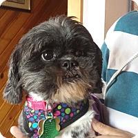 Adopt A Pet :: Galaxy - Schofield, WI