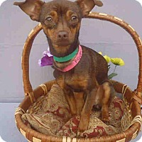 Adopt A Pet :: Hazel - Encino, CA