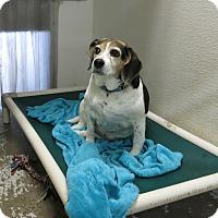 Adopt A Pet :: Riley - Geneseo, IL