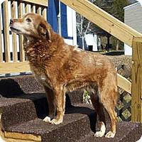 Adopt A Pet :: Roxie - BIRMINGHAM, AL
