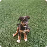 Adopt A Pet :: Percy - Nashville, TN