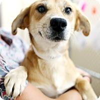 Adopt A Pet :: Darlene - Appleton, WI