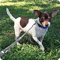 Adopt A Pet :: Tunie - Boca Raton, FL