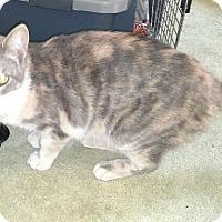 Adopt A Pet :: Pastel - Alhambra, CA