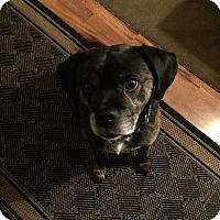 Adopt A Pet :: Tucker - Keswick, ON