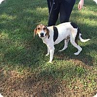 Adopt A Pet :: Rockefeller - Lexington, MA