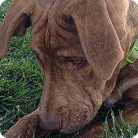Adopt A Pet :: Raven - Tehachapi, CA