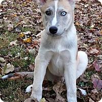 Adopt A Pet :: Hugh - Normandy, TN