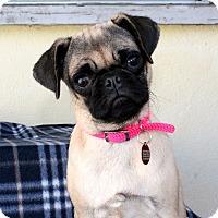 Adopt A Pet :: Luna - Los Angeles, CA