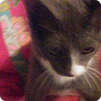 Adopt A Pet :: BLUE WILLOW - Mt. Laurel, NJ