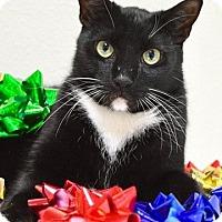 Adopt A Pet :: Trevor - Dublin, CA