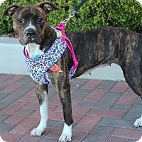 Adopt A Pet :: PEBBLES - Las Vegas, NV