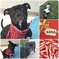 Adopt A Pet :: Kona - Joliet, IL