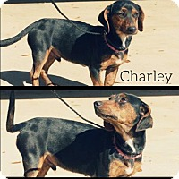 Adopt A Pet :: Charley - Longview, TX