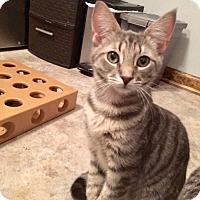 Adopt A Pet :: Poe - Colmar, PA
