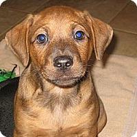 Adopt A Pet :: Roman - Marietta, GA