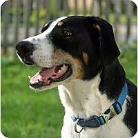 Adopt A Pet :: Bucky - Palmyra, WI