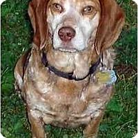 Adopt A Pet :: Moose - Novi, MI