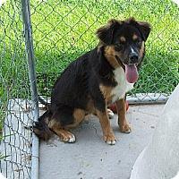 Adopt A Pet :: Clyde - Manning, SC