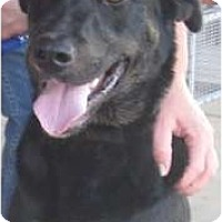 Adopt A Pet :: Abe - Sunnyvale, CA