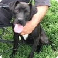 Adopt A Pet :: Mary Jane - Richmond, VA
