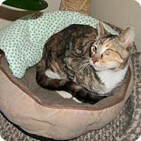 Calico Cat for adoption in Lacon, Illinois - Cutchie