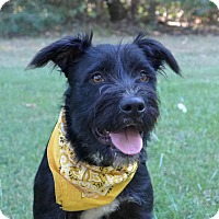 Adopt A Pet :: Cosmo - Mocksville, NC