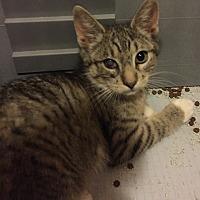Adopt A Pet :: Maddy - Sacramento, CA