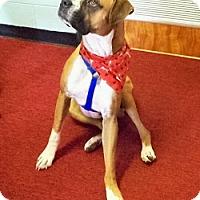 Adopt A Pet :: Diesel - Brentwood, TN