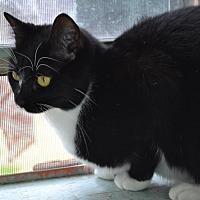 Adopt A Pet :: Ariel - Baton Rouge, LA