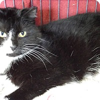 Adopt A Pet :: Sophie - Jeannette, PA