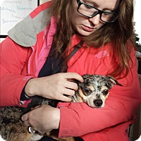 Adopt A Pet :: Jerbear, Senior 4 Senior - Davisburg, MI