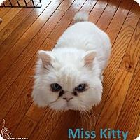 Adopt A Pet :: *Miss Kitty* - Manitowoc, WI