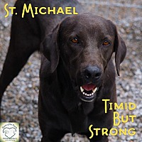 Adopt A Pet :: St. Michael - Washburn, MO