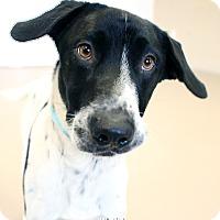 Adopt A Pet :: Henry - Appleton, WI