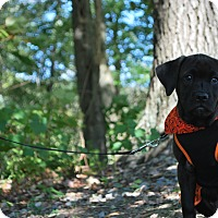 Adopt A Pet :: Camille - New Castle, PA