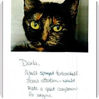 Adopt A Pet :: Darla (in CT) - Manchester, CT