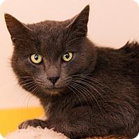 Adopt A Pet :: Mist - Brimfield, MA