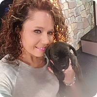Adopt A Pet :: Chloe - Fincastle, VA