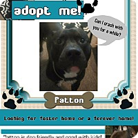 Adopt A Pet :: Patton-Adoption Pending - Des Moines, IA
