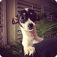 Adopt A Pet :: Leslie - Verona, NJ